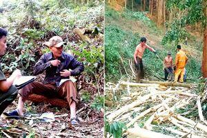 Nghệ An: Tranh chấp đất dai dẳng hơn 10 năm, huyện, xã vẫn chưa giải quyết xong