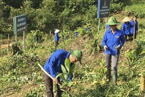 Tuổi trẻ Điện Biên đẩy mạnh hoạt động bảo vệ môi trường