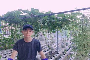 'Ngả mũ thán phục' với mô hình trồng rau thủy canh mang lại hiệu quả cao của 9X Bình Định