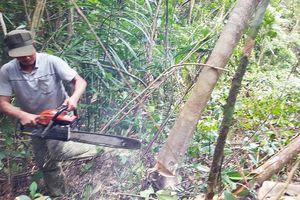 Vụ phá rừng Phú Yên: Kiểm điểm nhiều tập thể, cá nhân