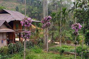 Cho lan 'sống chung' với cây cau, ngắm hoa đẹp ngỡ ngàng