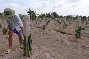 Ý kiến phản hồi loạt bài vấn nạn trộm cắp vườn cây ăn trái
