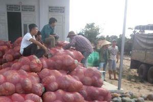 Hỗ trợ thu mua hàng chục tấn bí đỏ giúp nông dân Đắk Lắk