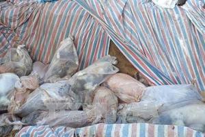 Phát hiện doanh nghiệp chôn lợn chết dưới ruộng gây ô nhiễm môi trường