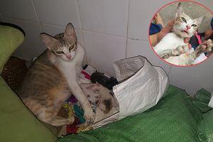Vỡ òa ngắm hình ảnh chú mèo bị hất nước nóng, đánh đến động kinh vừa sinh 3 con rất đáng yêu