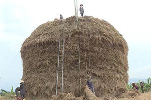 Quảng Ngãi: Cây rơm 'khủng' cao 30m trị giá 500 triệu đồng