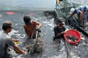 Ứng dụng công nghệ cao trong nuôi trồng thủy sản