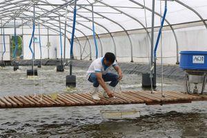 Năng lượng tái tạo giảm chi phí nuôi trồng thủy sản