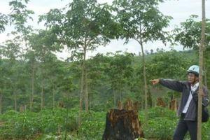 Chi tiết về sai phạm của 13 cán bộ ở Đắk Nông vừa bị xử lý