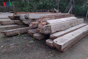 Để rừng bị phá, Phó Chủ tịch huyện ở Quảng Bình bị kỷ luật