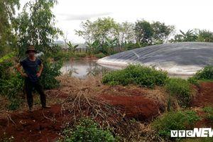 Trại heo ở Gia Lai gây ô nhiễm, dân than trời vì hôi thối, bệnh tật
