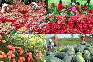 Lý giải nguyên nhân nông sản Việt xuất sang Trung Quốc gặp khó