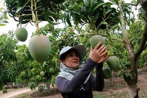 Nỗ lực tìm chỗ đứng cho sản phẩm của Việt Nam ở nước ngoài