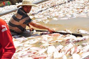 Thông tin mới nhất vụ cá bè sông La Ngà chết trắng chỉ sau 1 đêm