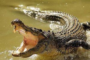 Nghi kênh nước có cá sấu khổng lồ, chính quyền cảnh báo người dân
