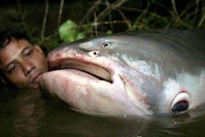 'Thủy quái' Vàm Nao và giai thoại thú vị về cá sấu 5 chân thành tinh