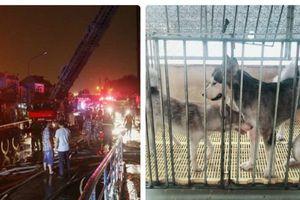 Vụ cháy chung cư Carina Plaza: Chú chó thông minh cứu gia đình chủ thoát chết
