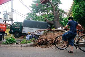 Sập mái nhà, đổ cây, cột điện... sau trận lốc ở Gò Vấp