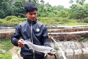 Cá tầm Việt 'chết yểu' vì cá tầm Trung Quốc