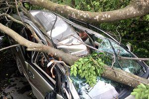 Cây ngã đè bẹp ôtô ở Sài Gòn, tài xế thoát chết trong gang tấc