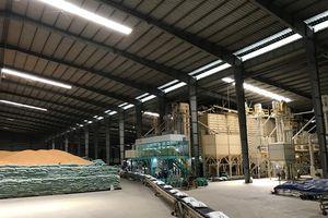 Việt Nam trúng thầu xuất khẩu gạo Japonica sang Hàn Quốc