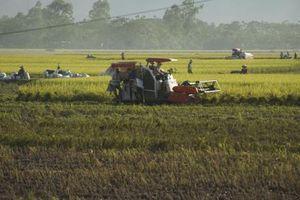 Tạm giữ đối tượng thu tiền 'bảo kê' máy gặt trên đồng