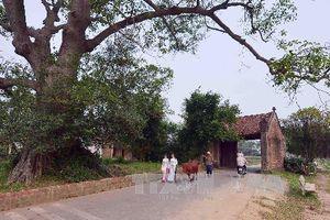 Làng cổ Đường Lâm loay hoay với phát triển du lịch