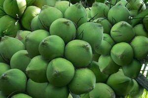 Dừa xiêm xanh tăng giá mạnh