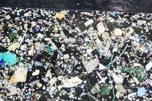 'Bãi rác Thái Bình Dương' đang tăng lên chóng mặt 'đe dọa' sức khỏe con người