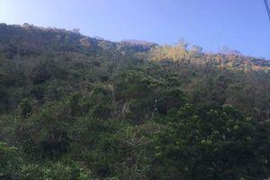Hàng ngàn ha rừng phòng hộ ven biển Khánh Hòa sẽ thành khu nghỉ dưỡng, resort ?