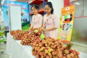 Tuần lễ đặc sản vải thiều Thanh Hà sẽ được tổ chức tại Hà Nội