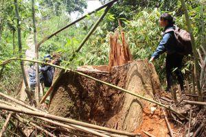 Để rừng bị tàn phá tan hoang, 6 kiểm lâm bị đình chỉ