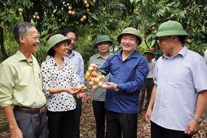 Chủ tịch tỉnh Hưng Yên 'thị sát' tình hình phát triển nông nghiệp