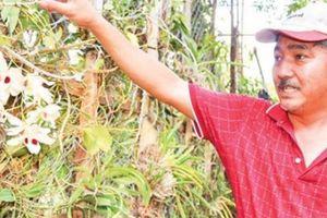'Đột nhập' vườn lan rừng nhất Việt Nam, thuyền độc mộc lớn xưa nay hiếm