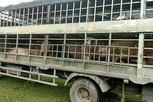Cung đường nhập lậu thịt lợn 'bẩn' giá rẻ từ Trung Quốc