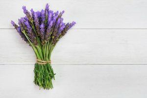 Chữa chứng mất ngủ hiệu quả với 5 loại cây trồng trong nhà quen thuộc