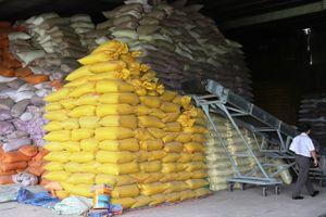 Chiêu trò lách luật của các doanh nghiệp kinh doanh giống lúa