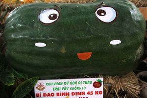 Những củ, quả khổng lồ 'gây sốt' ở Lễ hội Trái cây Nam Bộ