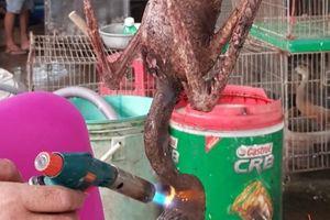 Nổi da gà, rùng rợn ở chợ tàn sát chim thú hoang Thạnh Hóa