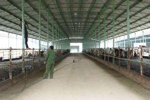 Vì sao nguyên Tổng giám đốc 'siêu' dự án chăn nuôi ở Hà Tĩnh bị bắt?