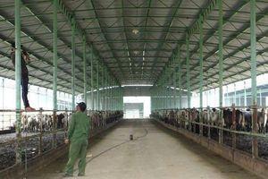 Hà Tĩnh: Bắt giam Tổng Giám đốc công ty CP chăn nuôi Bình Hà