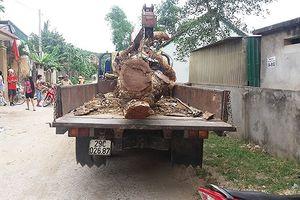Liều lĩnh thuê xe cẩu trộm cả cây mít trong nhà dân