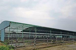 Hà Tĩnh: Khởi tố nguyên Tổng giám đốc công ty CP chăn nuôi Bình Hà