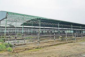 Vụ nguyên TGĐ Công ty CP Chăn nuôi Bình Hà bị khởi tố: Số tiền bị chiếm đoạt lên đến hơn 100 tỷ đồng