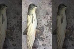 Sự thật về sinh vật kỳ lạ mình cá đầu chim khiến dân mạng 'dậy sóng'