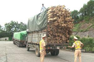 Bắt quả tang nhiều xe chở gỗ keo, tràm sai quy định