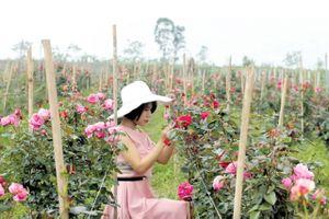 Nữ đại gia 9X bỏ tiền tỷ thuê đất bỏ hoang trồng hoa hồng