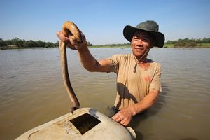 Mục sở thị tuyệt kỹ bắt lươn của những 'cao thủ' ở Quảng Nam