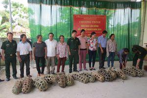 Đồn BP Tam Quang hỗ trợ lợn giống cho hộ nghèo