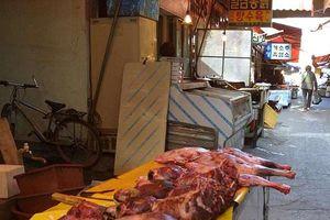 Hàn Quốc ra luật: Nuôi chó giết thịt là phạm pháp